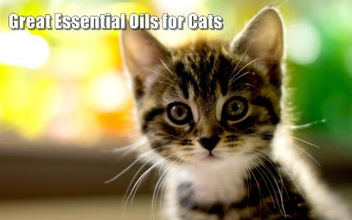 great essential oils for cats